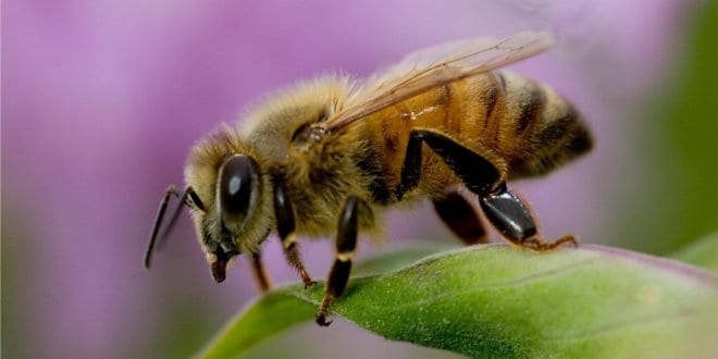 Bee on leaf in Arizona